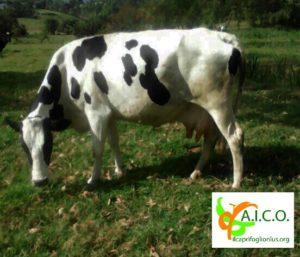 AICO progetto help children prison Uganda